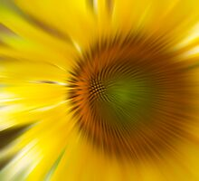 SUNFLOWER 01. by JOE CALLERI