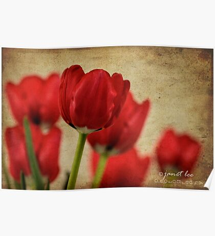 tulipes rouges Poster