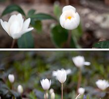 Spring Has Sprung by Shayna Sharp