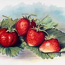 FGG strawberries #2 by sjames