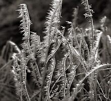 Frozen Weeds by Gary Taylor