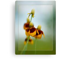 Cone Flower Framed Abstract Canvas Print