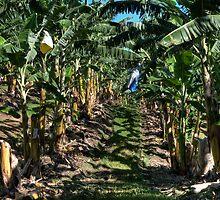 Bananas by Jason Ruth