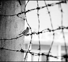'Bird on Barbed Wire: Freedom'. S21, Tuol Sleng Prison, Phnom Penh, Cambodia by RyanEdwardson