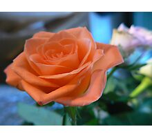 rose sweet girl Photographic Print