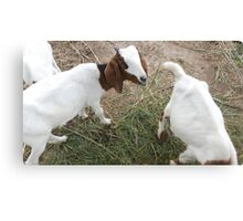 Goat Farm Animals Canvas Print