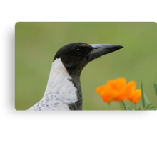 Magpies rule! Canvas Print