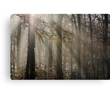 Foggy Morning in Leigh Woods Canvas Print