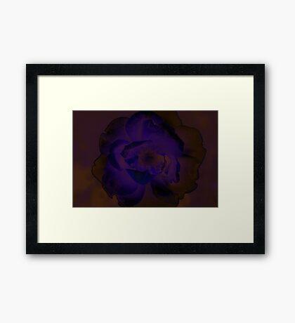 Purple Rose Framed Print