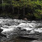 The Gut Conservation Area, Apsley Ontario by Tracy Faught