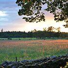 Field at Sunset by Hilda Rytteke