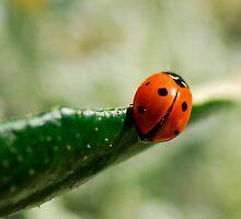 Ladybird by Heather Thorsen