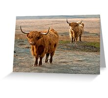 Beautiful Highlanders Greeting Card