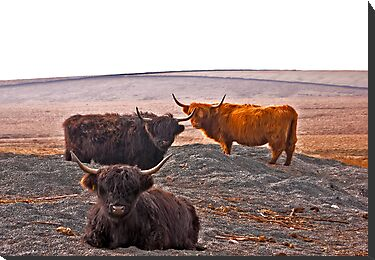 Highlanders on the Hills by Trevor Kersley