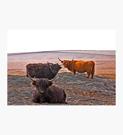 Highlanders on the Hills Photographic Print