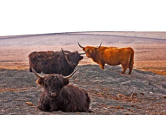 Highlanders on the Hills by Trevor Kersley