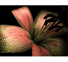 Lily & COLOURS Photographic Print