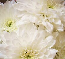 White Chrysanthimums by MichelleRees