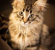 Flynn Cat 2 by flynncat
