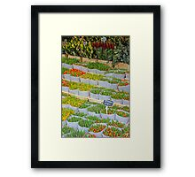 Tulips In The Capital Of Tulips Framed Print
