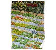 Tulips In The Capital Of Tulips Poster