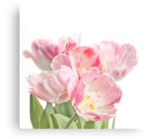 Soft, pink tulips Canvas Print