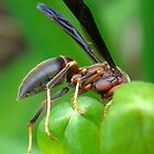 To The Point  ~ Wasp by BLemley