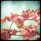 Pink Blossom by Marc Loret