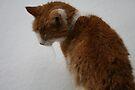 Curios-izz-ty Cooled the Cat by ellismorleyphto