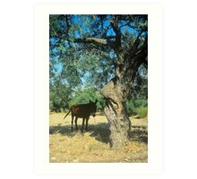 Afternoon shade, Cyprus Art Print