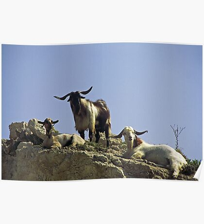 Mountain Goats, Cyprus Poster