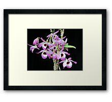 Pink Orchid Feb 2011 Framed Print