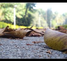Fallen leaves , fallen leaves ... on the ground  by abhibhat