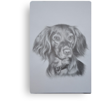 cocker spaniel no 2 Canvas Print