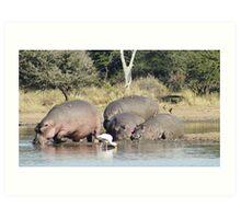 Hippo Pool - Kruger National Park Art Print
