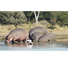 Hippo Pool - Kruger National Park Photographic Print