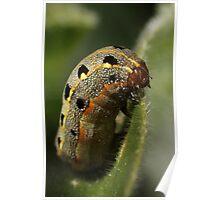 Chubby caterpillar Poster