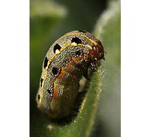 Chubby caterpillar Photographic Print