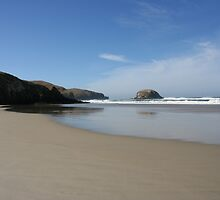 Allans Beach - New Zealand by Nicola Barnard