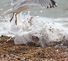 Seagull skipping the surf - Brighton Beach by mottyg