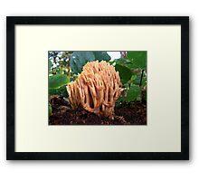 Coral Fungi Framed Print