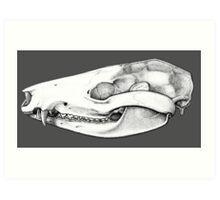 Opossum skull Art Print