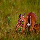 Twin Fawns Nursing by Joe Elliott