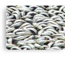 Sardines wash up at Redondo Beach Canvas Print