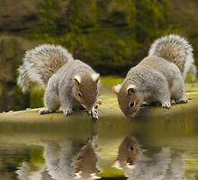 Double reflections by Lyn Evans