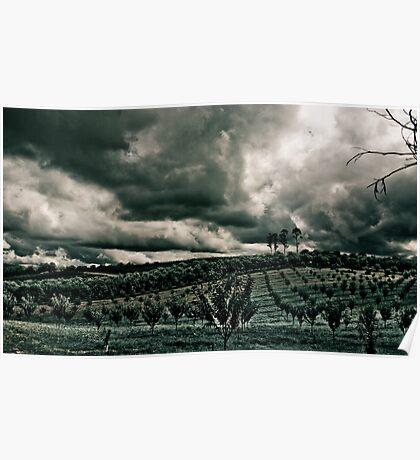 Vineyard Drama Poster