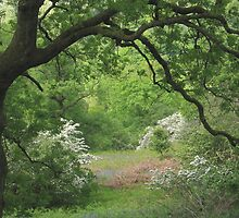 Gateway to spring by Jane Corey