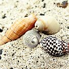 Shells on Flinders Beach by FineEtch