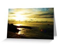 Fight of seagulls Greeting Card