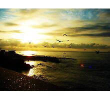 Fight of seagulls Photographic Print